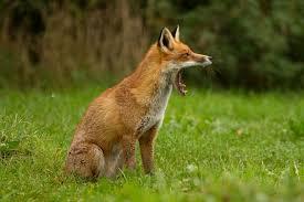 Έναρξη Ενεργητικής Επιτήρησης κατά της λύσσας
