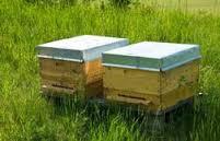 Ανακοίνωση του Μελισσοκομικού Συλλόγου Γρεβενών