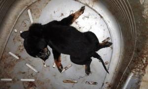 Φρίκη !!! 130 νεκρά ζώα στο κυνοκομείο Κοζάνης – Ανοιχτή επιστολή οργής (φωτογραφίες)