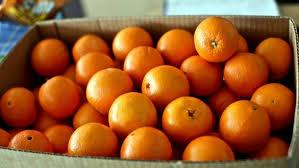 Διανομή πορτοκαλιών από τον Δήμο Γρεβενών
