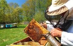 Κοπή πίτας του Μελισσοκομικού Συλλόγου Γρεβενών