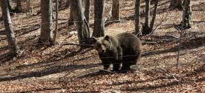 Ξύπνησαν… νωρίς οι αρκούδες στο Νυμφαίο -Λόγω των υψηλών θερμοκρασιών [εικόνες]