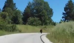 Κοζάνη: H αρκούδα βγήκε στην άσφαλτο! Δες το βίντεο….