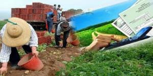 Φοροεπιδρομή για 350.000 αγρότες – Από 13% στο 22% ο συντελεστής, φόρος από το πρώτο ευρώ