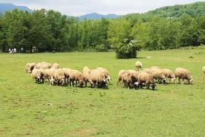 Επιστολή διαμαρτυρίας για την έλλειψη κτηνιάτρου από 123 κτηνοτρόφους των Καμβουνίων – Λιβαδερού