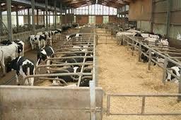 Αδειοδότηση  κτηνοτροφικών μονάδων