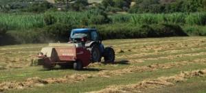 Επιστροφές ύψους 17 εκατ. σε Έλληνες αγρότες με απόφαση της Κομισιόν