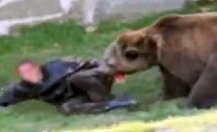 Σαμαρίνα : Αρκούδα έστειλε βοσκό στο Νοσοκομείο Γρεβενών