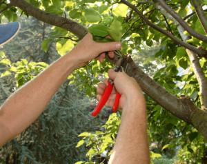 Δήμος Γρεβενών: Κλάδεμα δέντρων στην περιοχή του Μερά