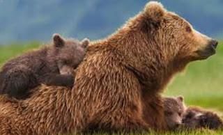 Απαγόρευση κυκλοφορίας ανήμερα της Πρωτομαγιάς στην Αναρράχη Κοζάνης λόγω αρκούδας