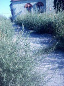 Αμυγδαλιές: Εδώ…θα ταφεί ο επόμενος νεκρός!Επιστολή Αναγνώστη(φωτογραφίες)