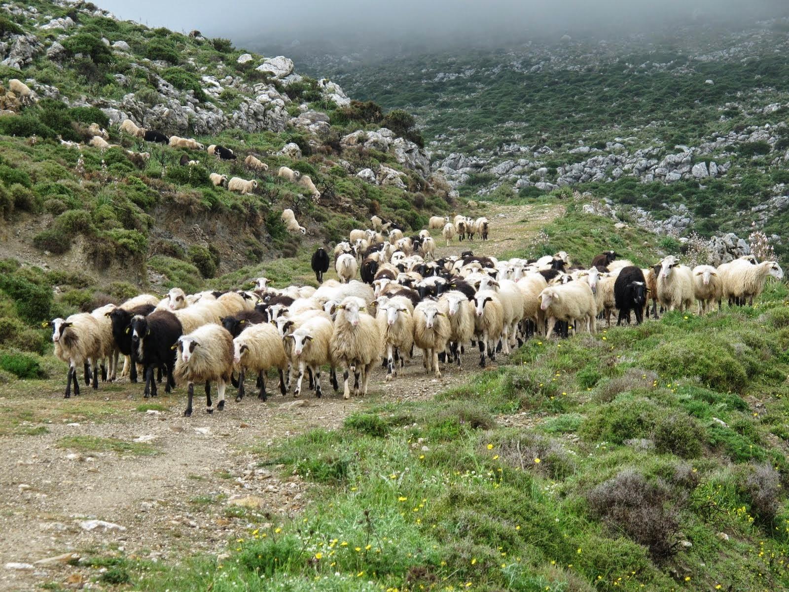 Αναλυτικές καταστάσεις της 4ης πληρωμής της δράσης 1.2. «Βιολογική Κτηνοτροφία»