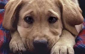 Γρεβενά: Δηλητηρίασαν σκύλο επί της οδού Μεγάλου Αλεξάνδρου