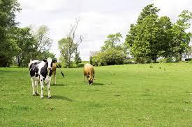 Αναλυτικές καταστάσεις της 1ης πληρωμής της δράσης 1.2. «Βιολογική Κτηνοτροφία»  έτους 2015