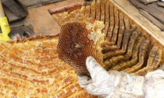 Tριήμερες ταχύρρυθμες εκπαιδεύσεις Μελισσοκόμων από το Κέντρο «ΔΗΜΗΤΡΑ» Γρεβενών