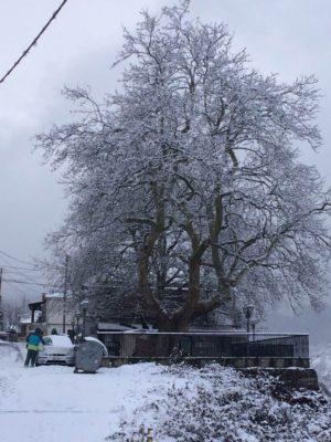 Τα χιονισμένα και παγωμένα πλατάνια στις πλατείες Δοτσικού και Πολυνερίου