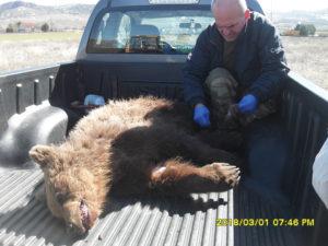 Ατύχημα με αρκουδάκι στην παλιά Εθνική Οδό Κοζάνης-Γρεβενών