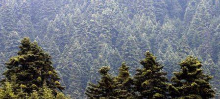 Έρχεται πρόγραμμα κοινωφελούς εργασίας με 5.066 θέσεις για προστασία των δασών