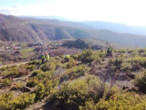 Αναδάσωση από τον ΤΑΡ στις τρεις Περιφέρειες της Βόρειας Ελλάδας
