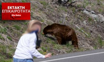 Άγιο είχε μια γυναίκα από την Καστοριά. Σκύλοι την έσωσαν από επίθεση αρκούδας