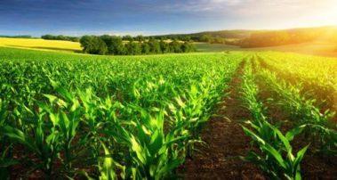 Έκδοση Πρόσκλησης από το πρόγραμμα Αγροτικής Ανάπτυξης (ΠΑΑ) 2014-2020
