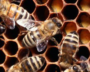 Δωρεάν τριήμερη ταχύρρυθμη εκπαίδευση μελισσοκόμων από το Κέντρο «ΔΗΜΗΤΡΑ» Γρεβενών