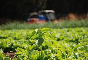«Βιολογικές Καλλιέργειες» – Πρόγραμμα Αγροτικής Ανάπτυξης 2014-2020