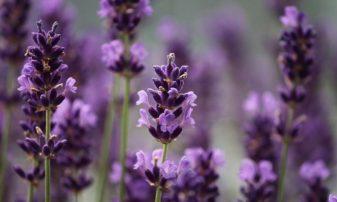 Ιωάννινα: Ο Δήμος παραχωρεί αγροτική γη σε ανέργους για καλλιέργεια θεραπευτικών φυτών