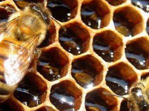 Γενική Συνέλευση Μελισσοκομικού Συλλόγου Γρεβενών το Σάββατο 16 Φεβρουαρίου