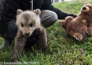 Μπράντλεϊ και… Κούπερ: Τα δύο νέα αρκουδάκια που υιοθέτησε ο «Αρκτούρος»