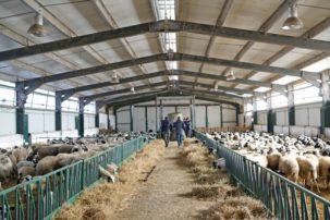 «Η απώλεια ποσοστού της Εξισωτικής Αποζημίωσης στους κτηνοτρόφους είναι εθνική επιλογή» *Γράφει ο Φωλίνας Μ. Αθανάσιος