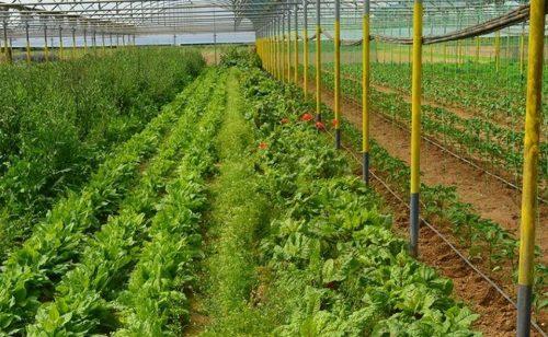 Επιπλέον κονδύλια για βιολογικές καλλιέργειες – Το ποσό για την Δυτική Μακεδονία