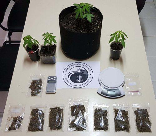 Συνελήφθησαν δύο ημεδαποί στην Πτολεμαΐδα, για καλλιέργεια δενδρυλλίων κάνναβης και κατοχή ναρκωτικών