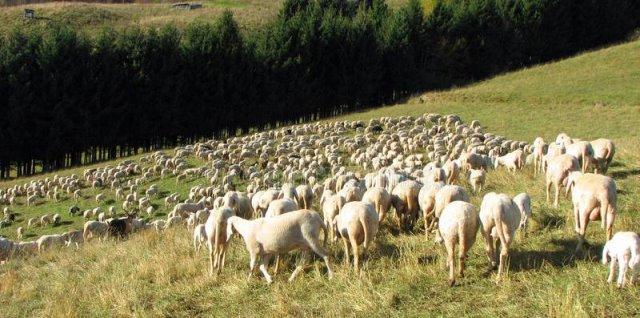 Ημερίδα για τους κτηνοτρόφους της Π.Ε. Γρεβενών σήμερα Δευτέρα 5 Οκτωβρίου