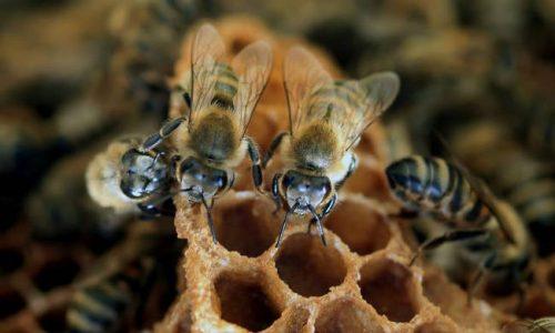 Π.Ε. Γρεβενών: Προστασία των μελισσιών από τους ψεκασμούς
