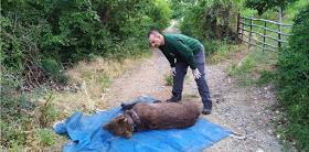 Ο ΑΡΚΤΟΥΡΟΣ έσωσε τον Ερμή από παράνομη παγίδα για αρκούδες (Φώτο)