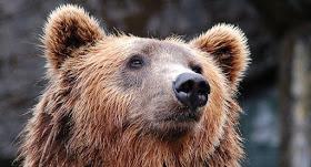 Ανακοίνωση της Αποκεντρωμένης Διοίκησης Ηπείρου-Δυτ. Μακεδονίας με αφορμή το περιστατικό εμφάνισης νεαρής αρκούδας σε οικισμό
