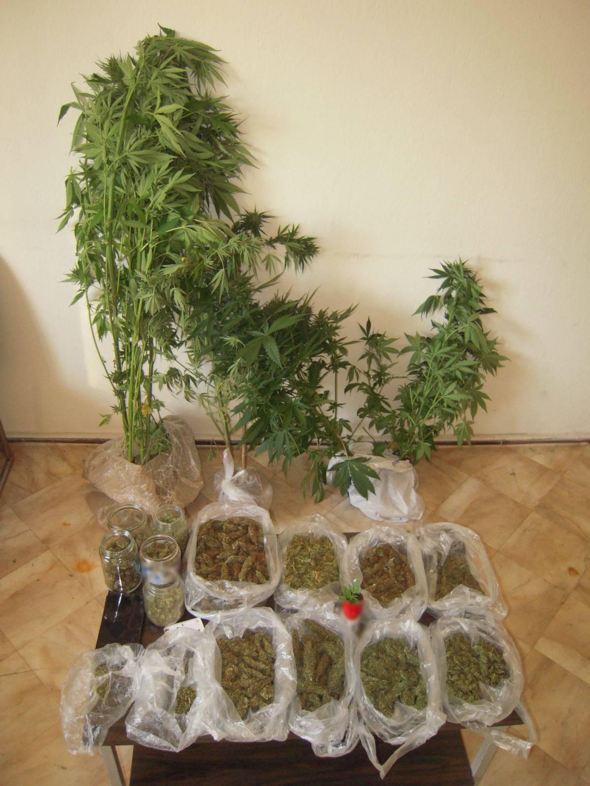 Σύλληψη 47χρονου ημεδαπού στα Γρεβενά για καλλιέργεια δενδρυλλίων κάνναβης και κατοχή ναρκωτικών ουσιών