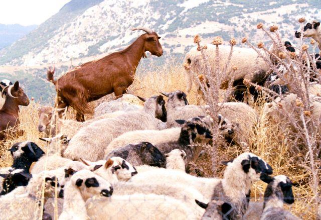 Ανακοίνωση από την Διεύθυνση Αγροτικής Οικονομίας και Κτηνιατρικής Γρεβενών