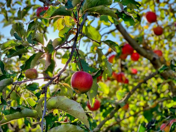 Τα 10 superfoods του φθινοπώρου – Δίνουν ενέργεια, δεν έχουν θερμίδες