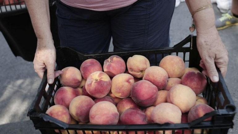 Οι Αιγύπτιοι ψηφίζουν ελληνικά προϊόντα -Ξεπουλάνε ακτινίδια, μήλα, δαμάσκηνα, κεράσια