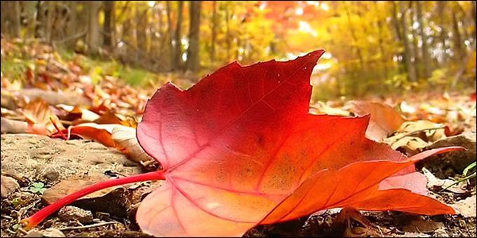 Φθινόπωρο:Η πιο αγαπημένη εποχή του χρόνου
