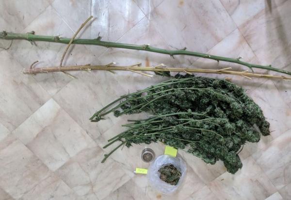 Γρεβενά:Σύλληψη 64χρονου για καλλιέργεια κάνναβης και κατοχή ναρκωτικών ουσιών