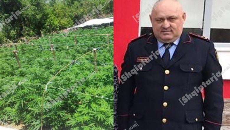 Αλβανία:Η αστυνομία… έδινε τις άδειες για τις χασισοφυτείες