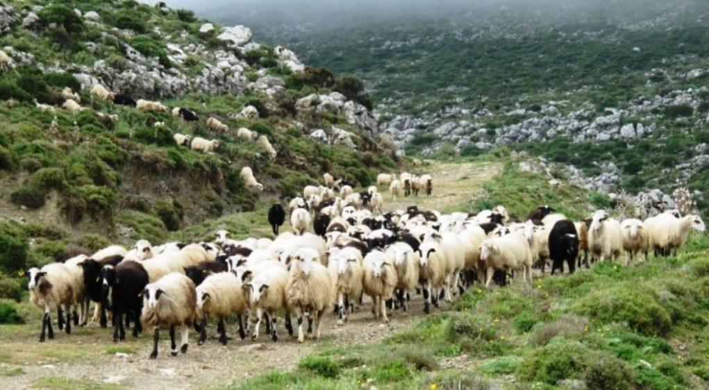 Ο Βορίδης ενέκρινε τέσσερα εκατομμύρια ευρώ για αποζημιώσεις σε κτηνοτρόφους – 17.533,00€ για την Δυτική Μακεδονία