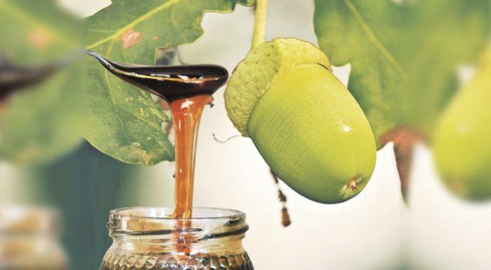 Μέλι βελανιδιάς με ταυτότητα από τα Γρεβενά