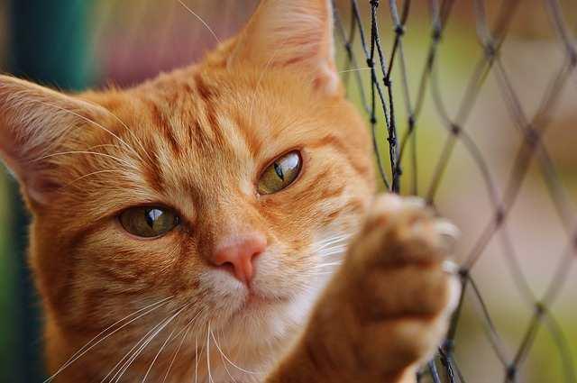 Κτηνωδία στα Τρίκαλα: Δεκάδες γάτες νεκρές από φόλες