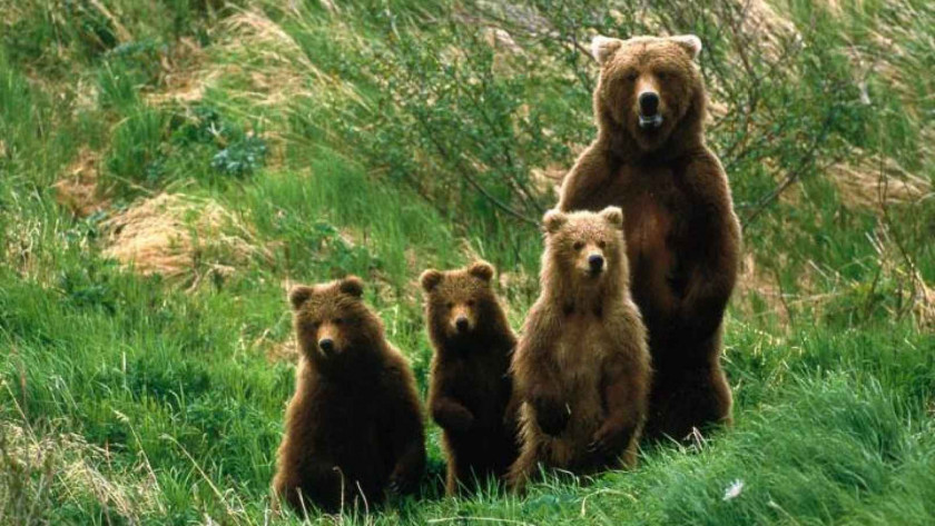 Εντοπίστηκε νεκρό αρκουδάκι στο Αμύνταιο