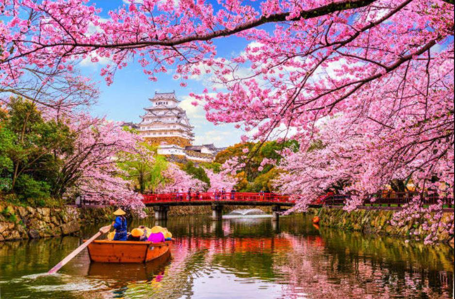 Οι κερασιές «ανθίζουν» τη σχέση Τρικάλων- Ιαπωνίας