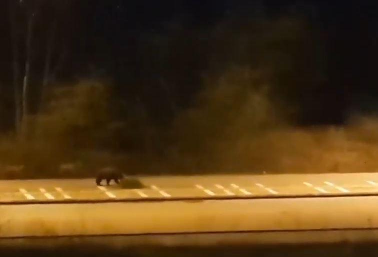 Αρκούδες «βγήκαν βόλτα»…εν μέσω καραντίνας στην Καστοριά